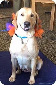 Golden Retriever/Labrador Retriever Mix Dog for adoption in Homewood, Alabama - Penny Pup