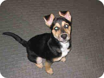 German Shepherd Dog Mix Puppy for adoption in Newnan City, Georgia - Malory