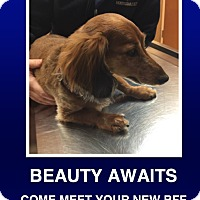 Adopt A Pet :: Lily - Morrisville, PA