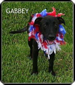 Labrador Retriever Mix Dog for adoption in Houston, Texas - Gabby