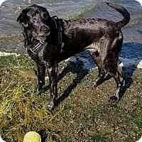 Adopt A Pet :: Beauregard - San Francisco, CA