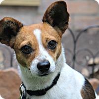 Adopt A Pet :: Danny Glover - Jersey City, NJ