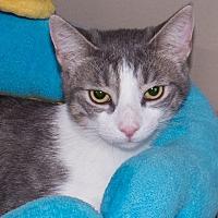 Adopt A Pet :: Libby - Elmwood Park, NJ