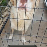 Adopt A Pet :: Thor - Marianna, FL