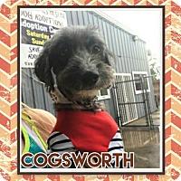 Adopt A Pet :: Cogsworth - Houston, TX