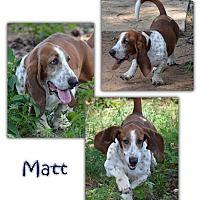 Adopt A Pet :: Matt - Marietta, GA