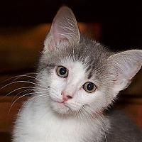 Adopt A Pet :: Paul - Huntsville, AL