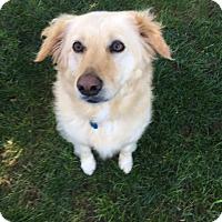 Adopt A Pet :: Tula - New Canaan, CT