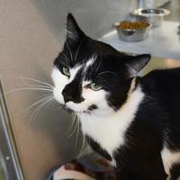 Adopt A Pet :: Fern - Calgary, AB