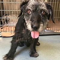 Adopt A Pet :: Lucky - Dana Point, CA