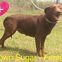 Adopt A Pet :: Brown Sugar - Waycross, GA