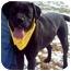 Photo 3 - Labrador Retriever Dog for adoption in Wakefield, Rhode Island - ARTHUR