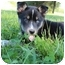 Photo 2 - Husky Mix Puppy for adoption in Allentown, Pennsylvania - Rowlf