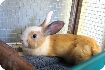 Other/Unknown Mix for adoption in Medfield, Massachusetts - Patchwork