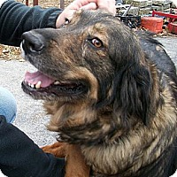 Adopt A Pet :: Brandy - Bonded to Lady - New Canaan, CT