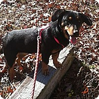Adopt A Pet :: Stacie - Chattanooga, TN