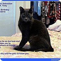 Adopt A Pet :: Toby (Tobias Elias Sebastian) - Orlando, FL