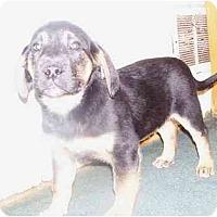 Adopt A Pet :: Dodge - Roseville, MI
