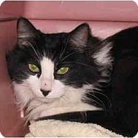 Adopt A Pet :: Mollie - AUSTIN, TX
