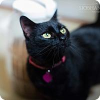 Adopt A Pet :: Magic Senior Special - Fredericksburg, VA