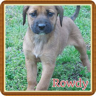 German Shepherd Dog Mix Puppy for adoption in Cranford, New Jersey - Rowdy