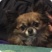 Adopt A Pet :: Tiny Spike-ADOPTED - Lynnwood, WA