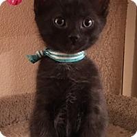 Adopt A Pet :: SparrowW - North Highlands, CA