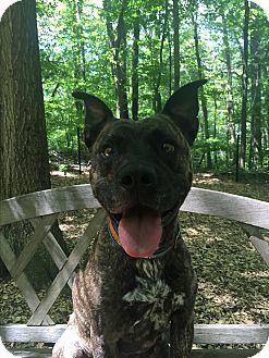 Terrier (Unknown Type, Medium) Mix Dog for adoption in Walden, New York - Karma