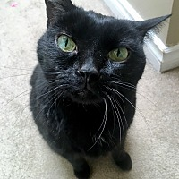 Adopt A Pet :: BlackJack - Toronto, ON