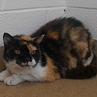 Adopt A Pet :: Patches - Wooster, OH