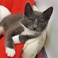 Adopt A Pet :: Fallon - Encinitas, CA