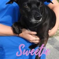 Adopt A Pet :: Sweetie - Gainesville, FL