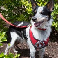 Adopt A Pet :: Finn - Wichita, KS