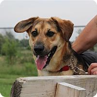 Adopt A Pet :: Rocco - Elyria, OH