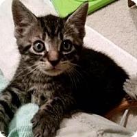 Adopt A Pet :: Hendrix - Hampton, VA