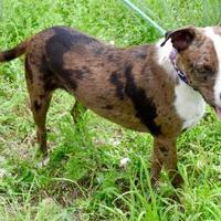 Adopt A Pet :: Sparky - Payson, AZ