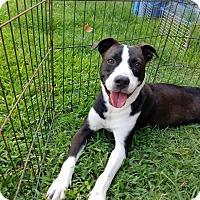 Adopt A Pet :: Roxy - Seguin, TX