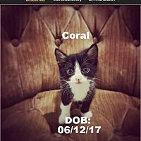 Adopt A Pet :: Coral - Chandler, AZ