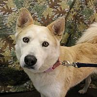 Adopt A Pet :: Gabrielle - Huachuca City, AZ