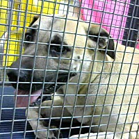 Adopt A Pet :: URGENT on 8/17@DEVORE San Bern - San Bernardino, CA
