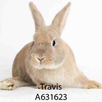 Adopt A Pet :: *TRAVIS - Camarillo, CA