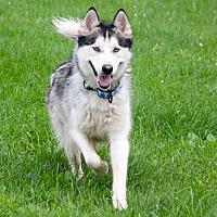 Adopt A Pet :: Draco - Sycamore, IL