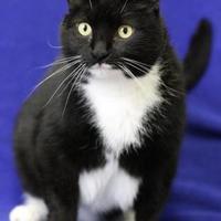Adopt A Pet :: Pepper - Blackwood, NJ
