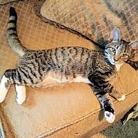 Adopt A Pet :: Ziggy - Norristown, PA