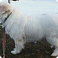 Adopt A Pet :: Olivia - Minneapolis, MN