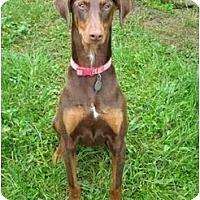 Adopt A Pet :: Nim--adopted! - New Richmond, OH
