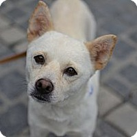 Adopt A Pet :: Willow - Los Angeles, CA