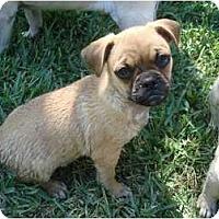 Adopt A Pet :: Alf - Windermere, FL