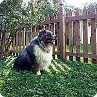 Adopt A Pet :: Murphy - Washington, IL