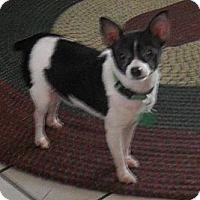 Adopt A Pet :: POPPY: Coming Soon - Palm Coast, FL